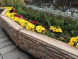 小倉駅北口広場に咲いていた花