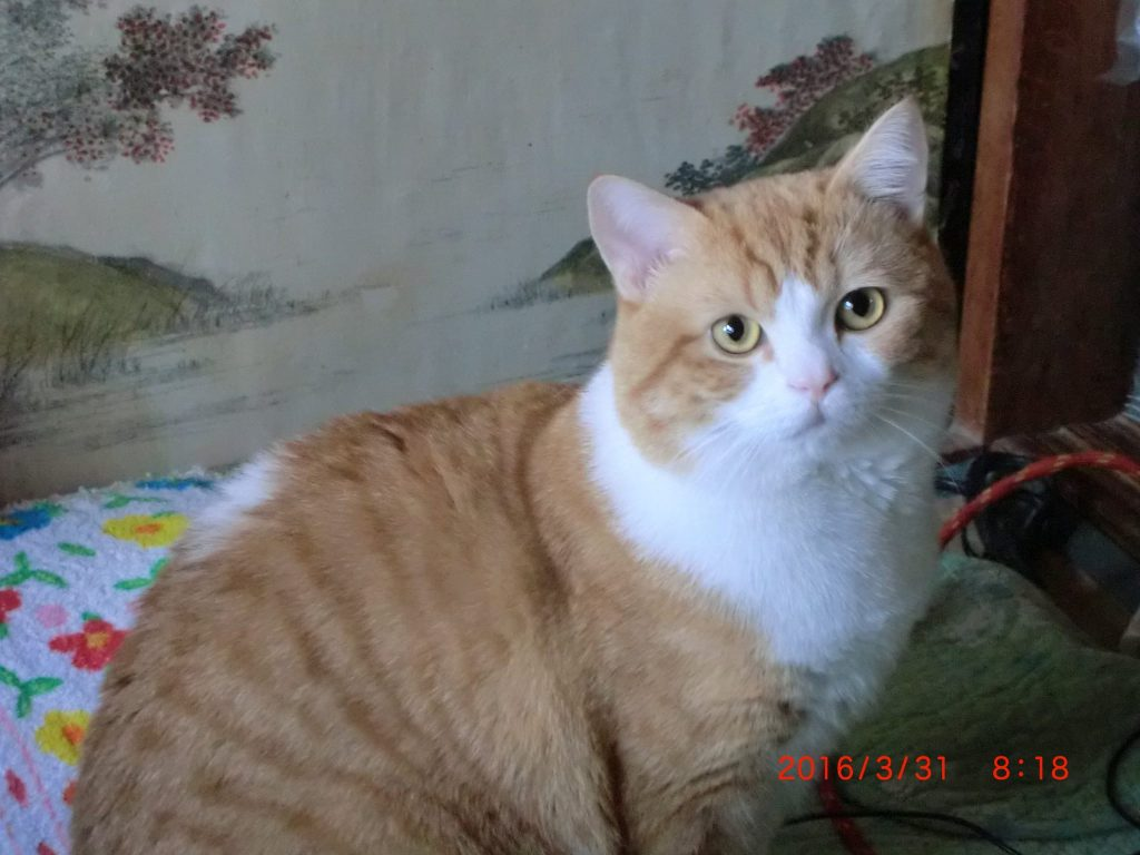 pic_cat1